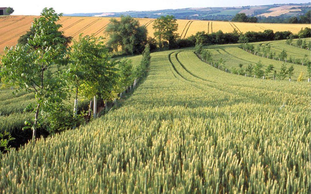 Agroforstsysteme