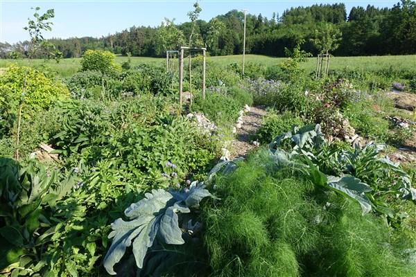 Mehrjährige Gemüsepflanzen